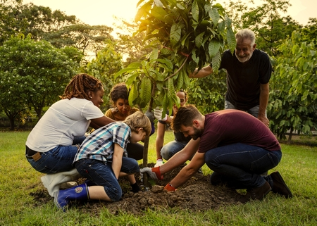 Group of people planting a new tree Stock fotó