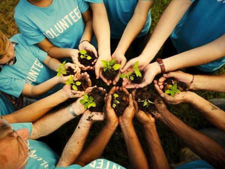 Gruppe von Freiwilligen, die neue Bäume pflanzen