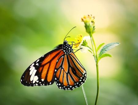 Primo piano di una farfalla monarca Archivio Fotografico