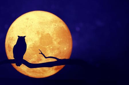 Pleine lune dans le ciel nocturne