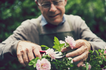 Mature man tending to his flowers 版權商用圖片