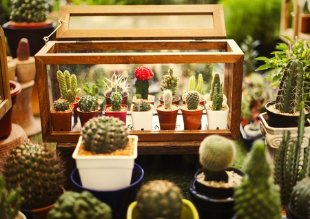 Collection of tiny cacti in a box 版權商用圖片
