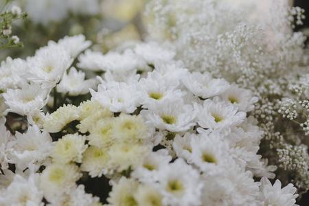 White gerbera daisy and white Caspia 版權商用圖片