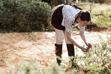 Woman collecting fresh herbs in her garden