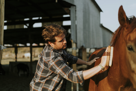 Young man grooming his horse Stockfoto