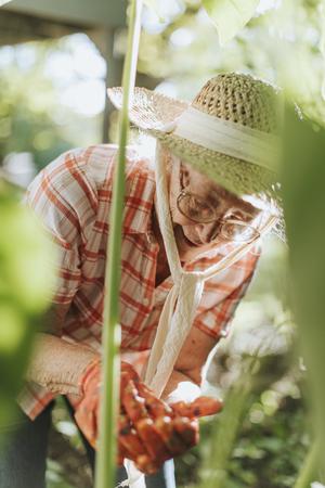 Senior woman tending to the plants in her garden 版權商用圖片