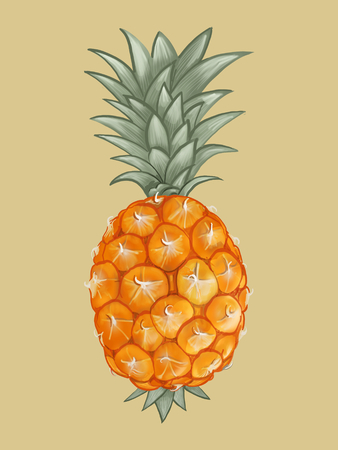 Whole fresh tropical pineapple illustration