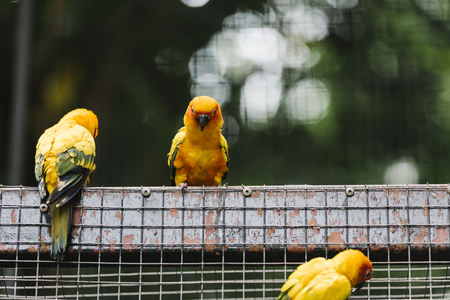 Yellow birds in an enclosure