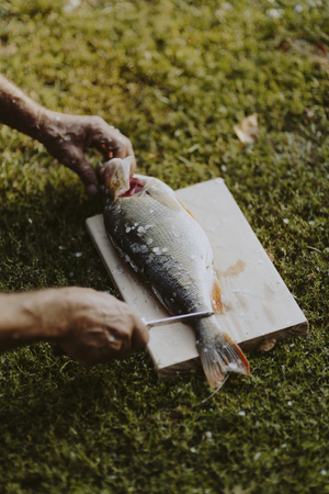 Fisherman holding fish on a cutting board