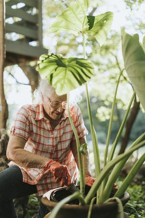 Senior woman tending to the plants in her garden Stock Photo