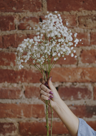 Woman holding a bunch of white gypsophila flowers