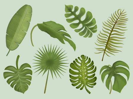 Set of tropical leaf illustrations 写真素材