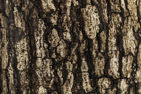 The bark of a tree background Stock Photo