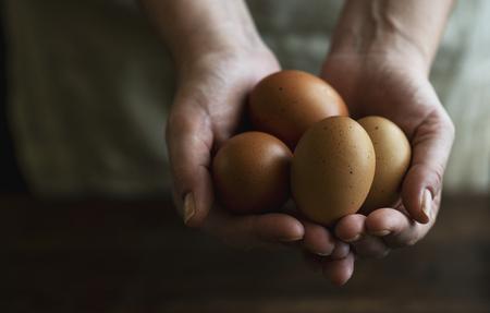 Huevos marrones orgánicos de gallinas camperas