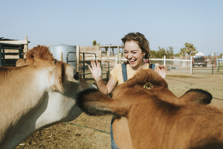Cheerful young girl playing with rescued cows 写真素材 - 113891488
