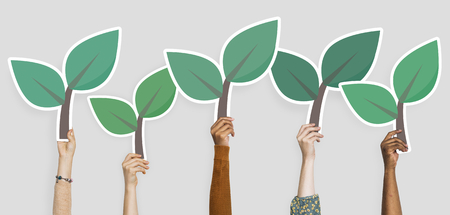 Hands holding plant leaves clipart Stock Photo