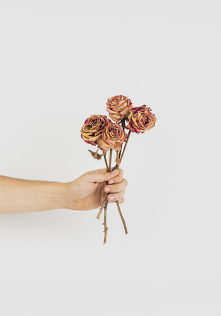 Hand holding a bunch of dried roses Stock Photo