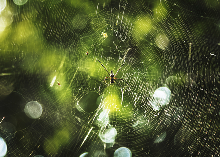 Spider's web in a forest