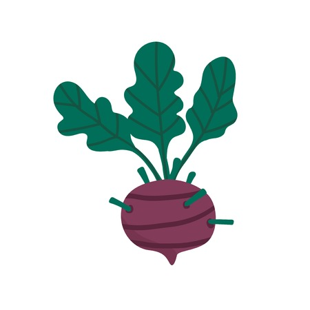 Fresh beetroot vegan movement vector Illustration