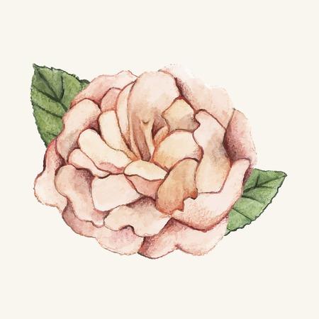 Hand drawn peony flower isolated Standard-Bild - 126453033