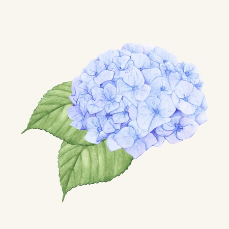 Hand drawn hydrangea flower isolated Illustration