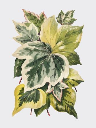 Vintage Pflanzen und Blätter Illustration