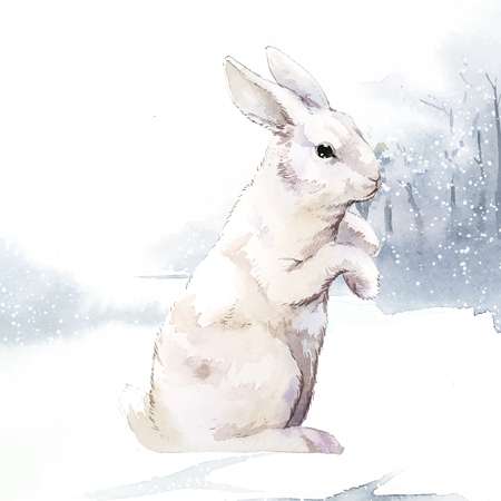 Illustration of a rabbit Ilustrace