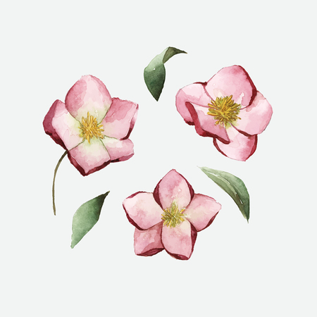 Hellebore flowers painted by watercolor vector Vector Illustration