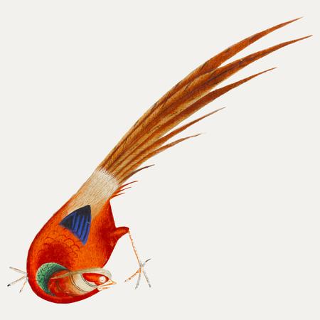 Peinture chinoise d'un oiseau.