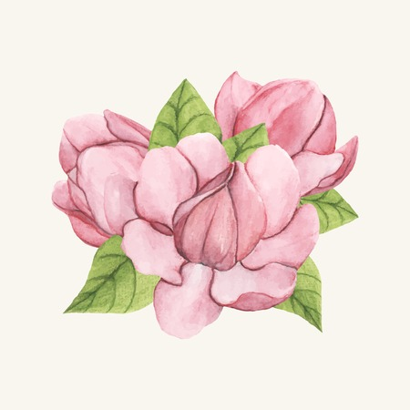Hand drawn saucer magnolia flower isolated