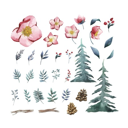 Watercolor set of winter flowers and leaves vector Illustration