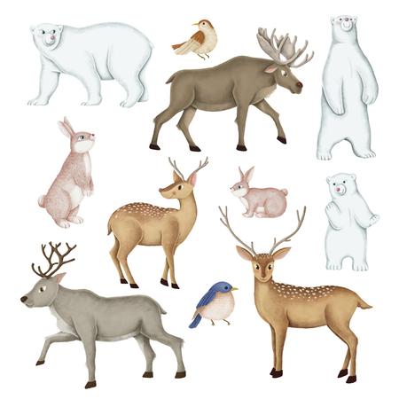 Conjunto de animales salvajes dibujados a mano