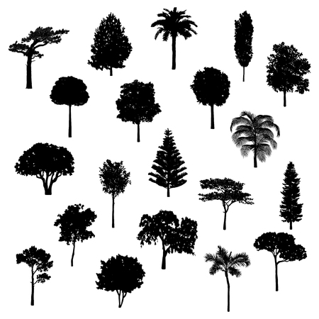 Sagoma di alberi