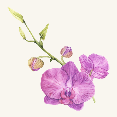 Hand drawn orchid flower isolated Illustration