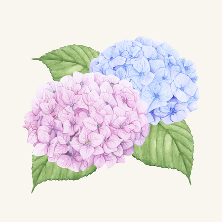 Hand drawn hydrangea flower isolated Ilustrace