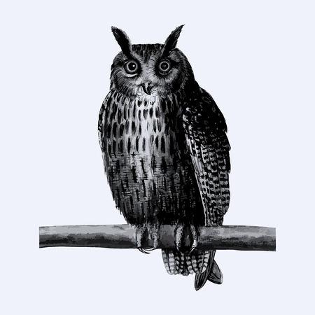 Vintage long eared owl illustration in vector