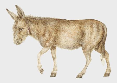 Illustrazione di asino vintage in vettoriale