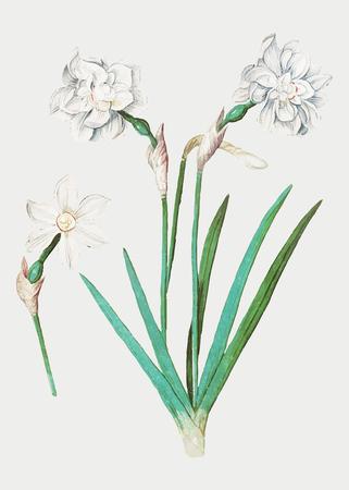 Vintage ilustracja kwiat dzwon w wektorze