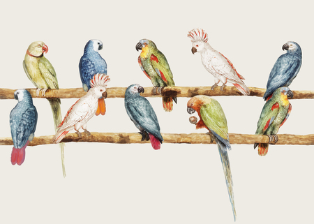 Vintage parrot variety perched on the branch illustration Illustration