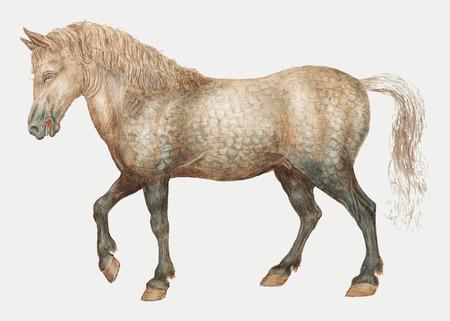 Illustrazione di cavallo vintage in vettoriale Vettoriali