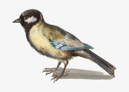 Vintage great tit bird illustration vector Banco de Imagens - 115859261