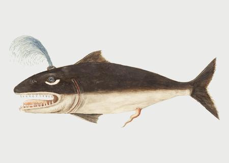 Illustrazione vettoriale di pesce balena vintage Vettoriali