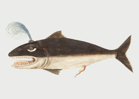 Vintage whale fish illustration vector