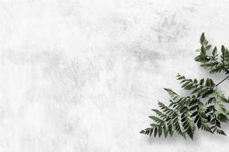 Leatherleaf fern on gray background Archivio Fotografico