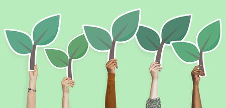 Hands holding plant leaves clipart Banco de Imagens