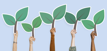 Hands holding plant leaves clipart 版權商用圖片