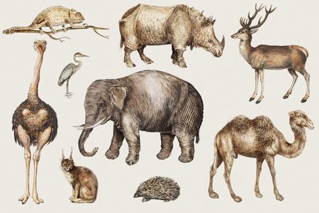 Conjunto de animales de safari vintage