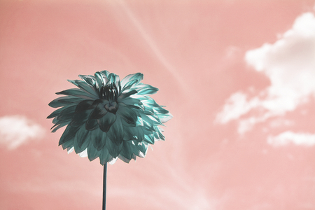 Negative photo effect of a flower