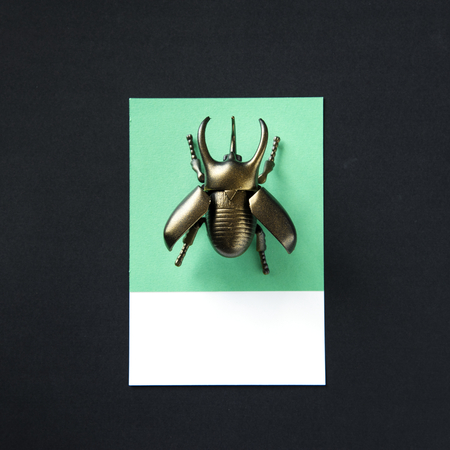 Winged beetle insect toy object
