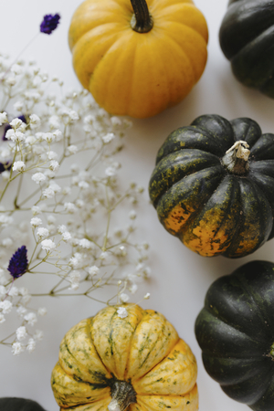 Aerial view of mini pumpkins and white gypsophila flowers Stock Photo
